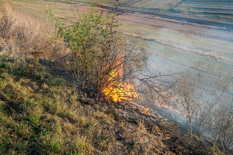 Burning dry vegetation at roadside, after a dry summer and autumn. Conceptual image of human negligence royalty free stock images