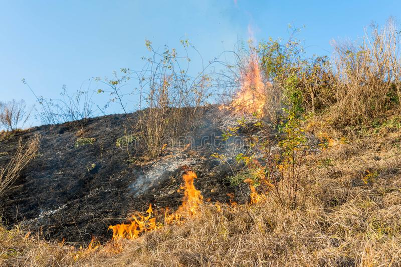 Burning dry vegetation at roadside, after a dry summer and autumn. Conceptual image of human negligence royalty free stock photos