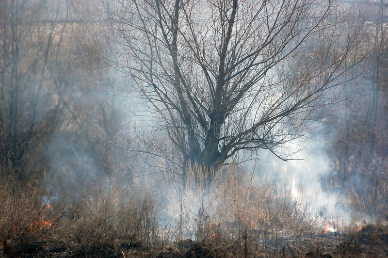 Download Burning Earth. stock photo. Image of harvest, bushes, environmental - 8520202