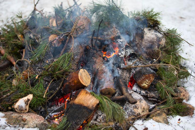 Burning fir branches. Forest fire stock photo