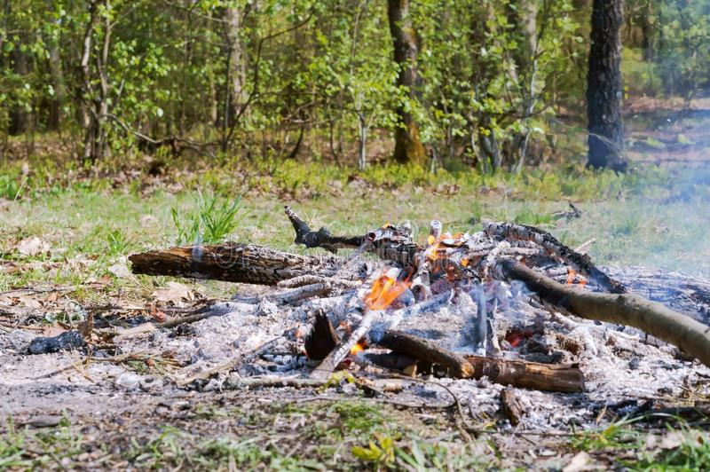 A burning fire in the forest, the remains of burnt wood royalty free stock images