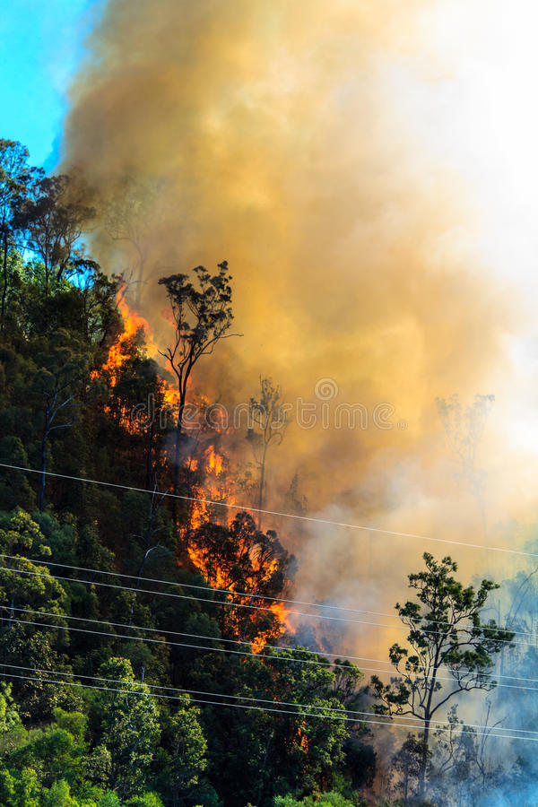 Download Burning Forest Near Power Cables Stock Photo - Image: 34799278