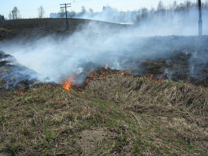Burning grass stock photography