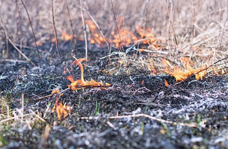 Burning grass. Spring arsons of a grass are a disaster. Strong wind spreads fire royalty free stock photos