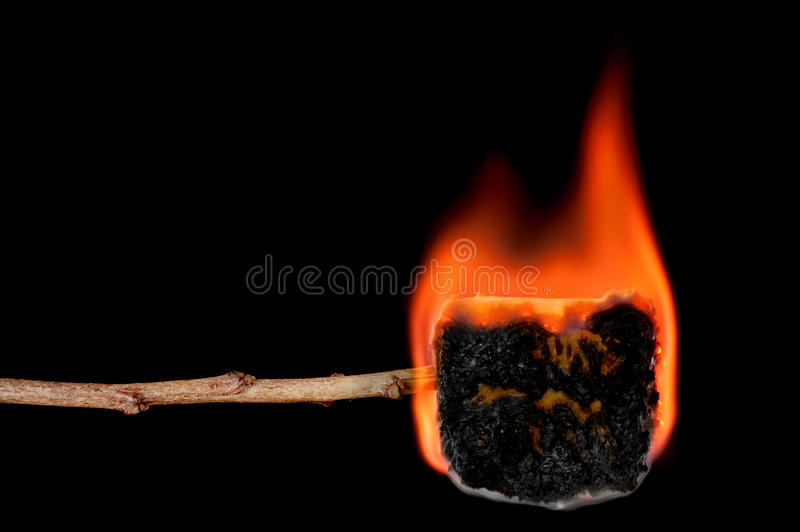 Burning marshmallow on a stick royalty free stock image