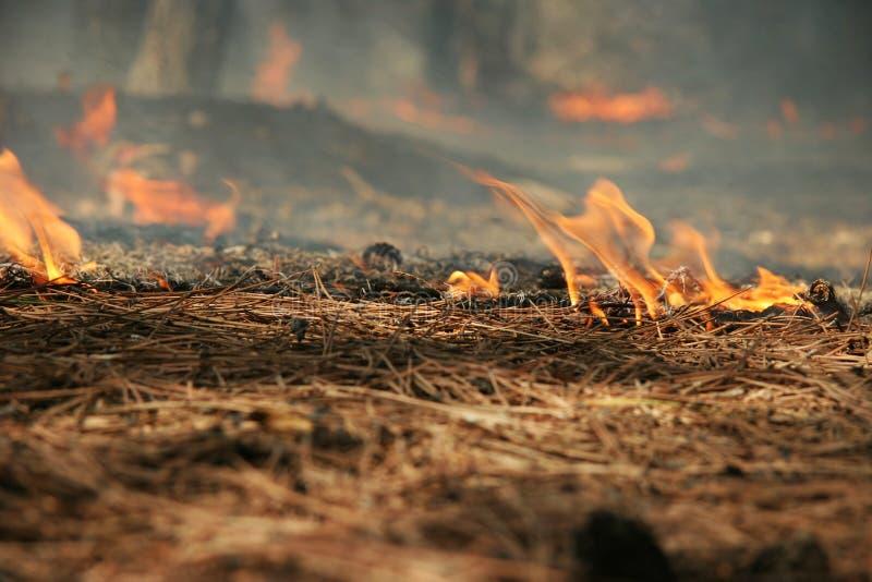 Download Burning needles stock image. Image of tongues, burn, smoke - 10018745