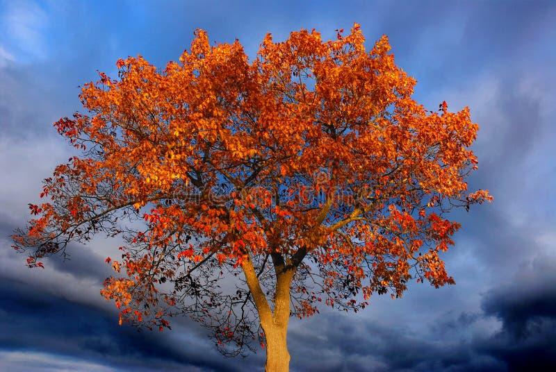 Burning orange tree, dark sky stock photos