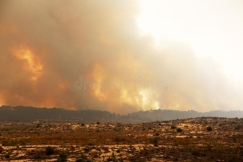 Burning portugais de forêt photo stock