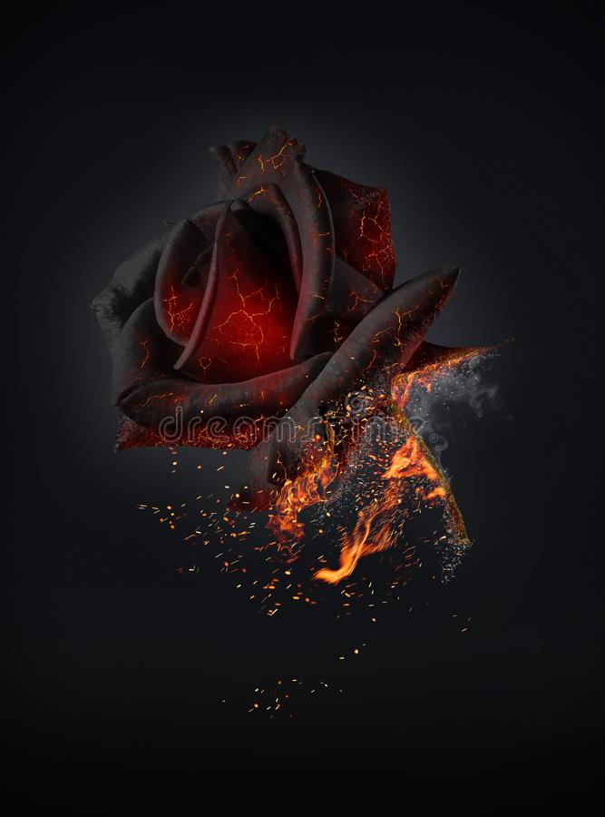 Burning red rose symbol of passionate love stock image