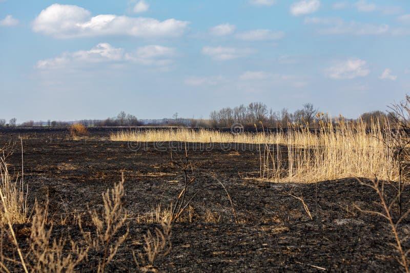 Burning of straw royalty free stock photography