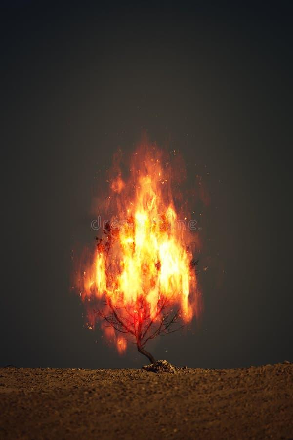 Free Burning Thorn Bush Christian Symbol Stock Photos - 191045963