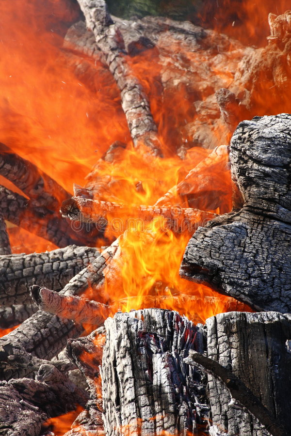 Burning trees stock photos