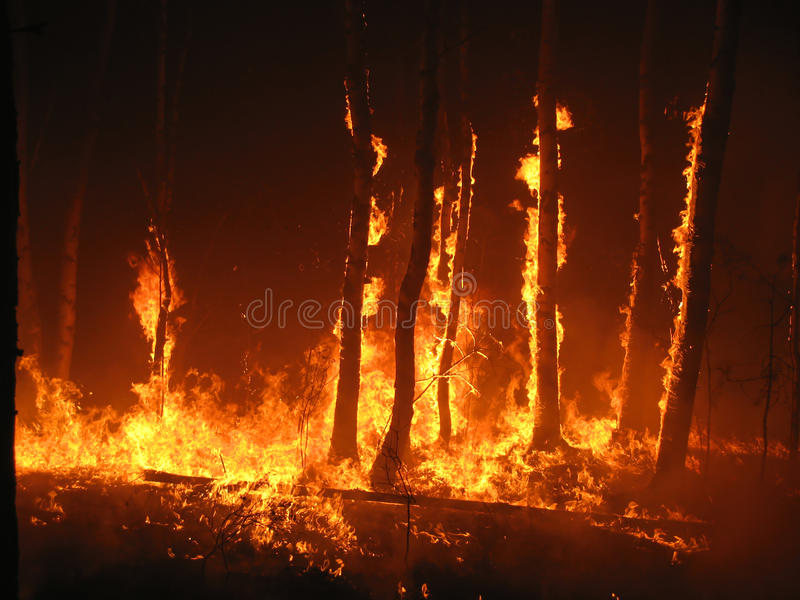 Burning trees in the forest stock photos