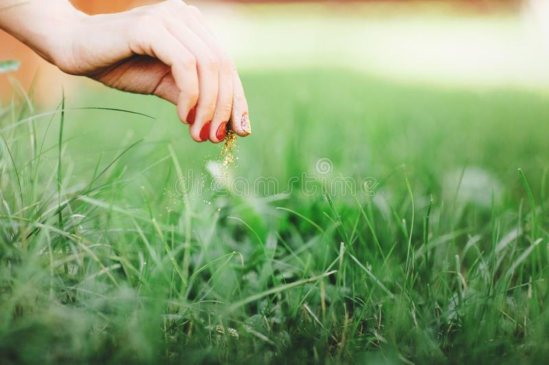 Burning weeds in the grass. Close up of womans hand, takes care of the lawn. Space for text royalty free stock photos