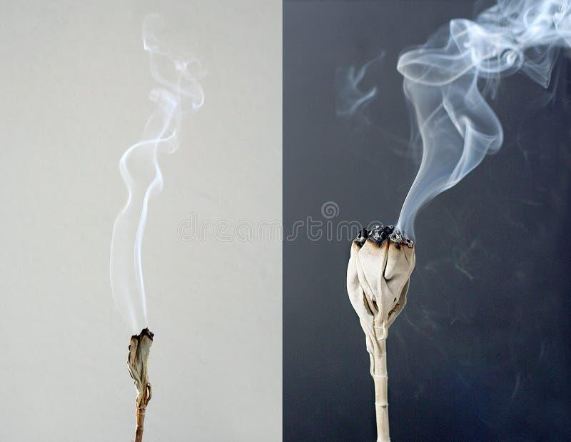 Burning white sage royalty free stock image
