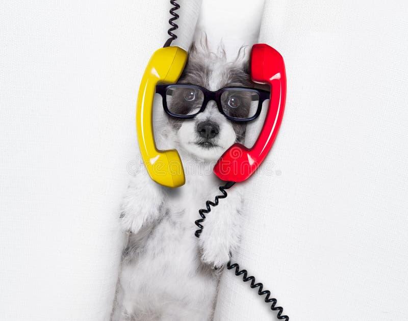 Burnouthund bei der Arbeit lizenzfreie stockfotos