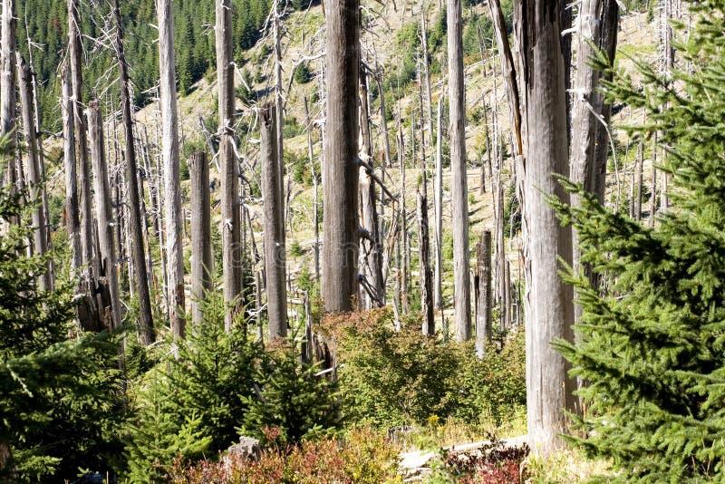 burns helens góry zdjęcia st zapasów drzewa zdjęcie stock