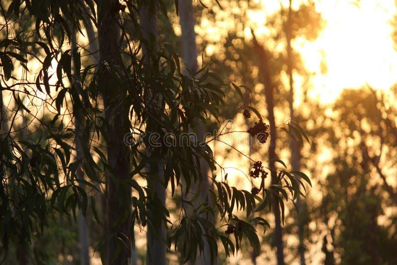 Burnt! zdjęcie royalty free