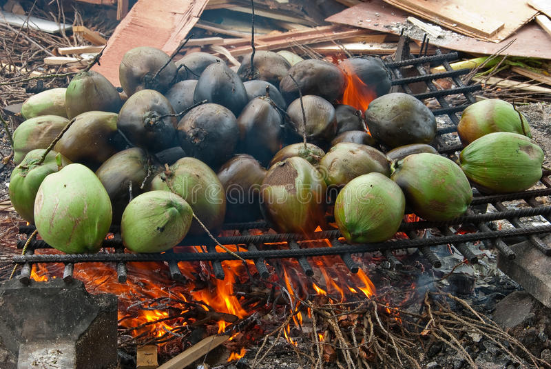 Download Burnt coconuts stock image. Image of peel, tropical, water - 25590573