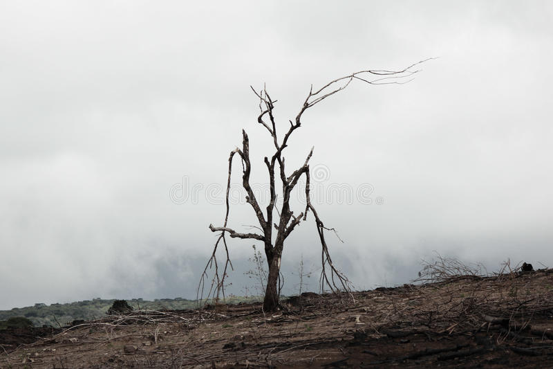 Burnt dead tree royalty free stock image