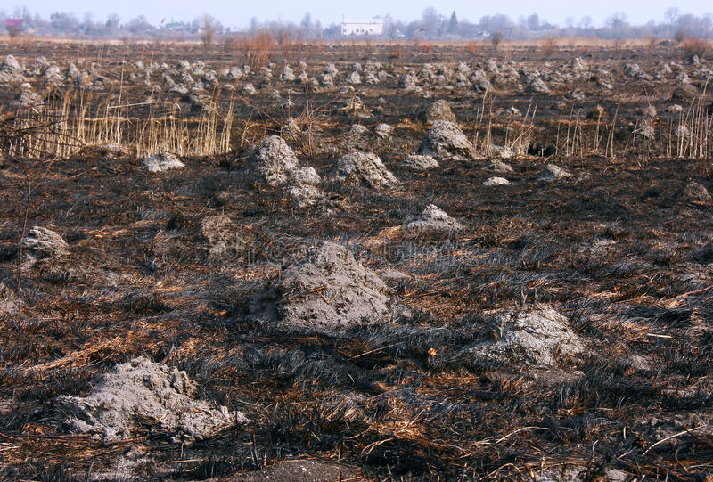 Burnt field