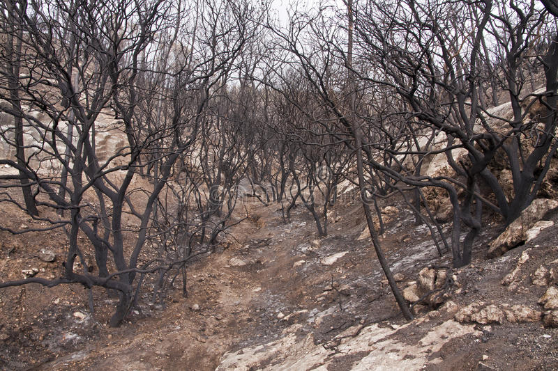 Burnt Forest. A burnt forest in the Carmel mountains - Israel stock photos