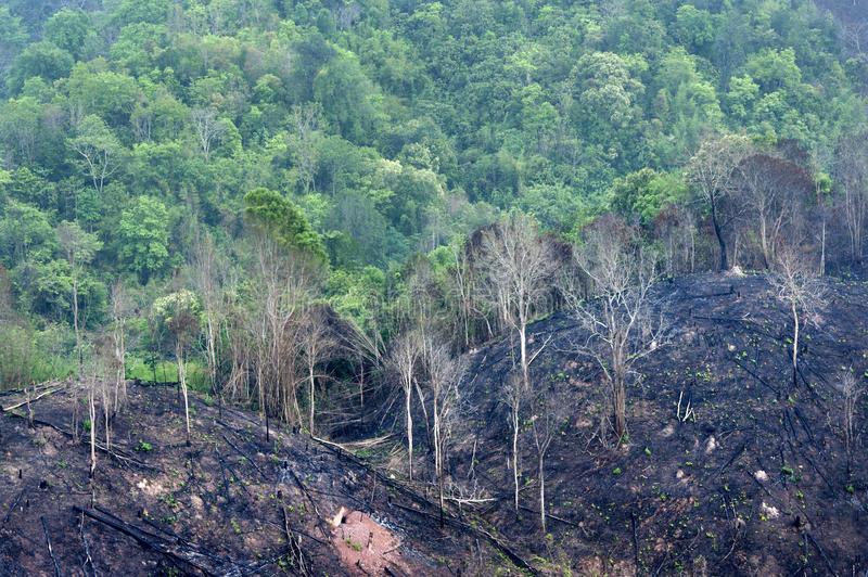 Burnt forest on mountain. Burnt forest on hight mountain royalty free stock photos