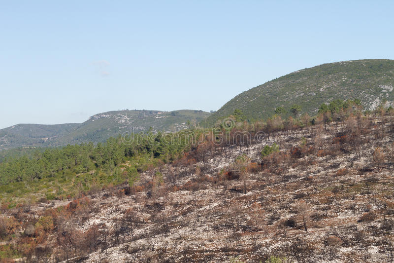 Download Burnt hills stock image. Image of dead, disaster, bark - 28226491
