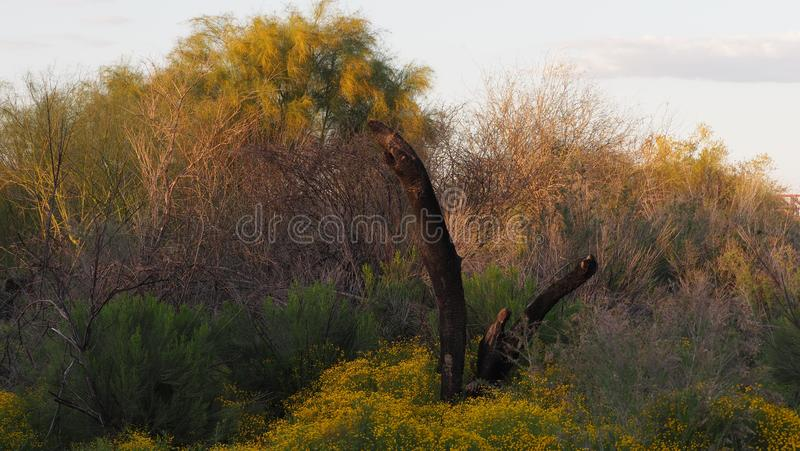 Burnt Out. Abstract, nature, photography, foto, natura, picture, vgphotoz, colors, arizona, original, work, art, artistic, plants, sky, image, composition stock photo