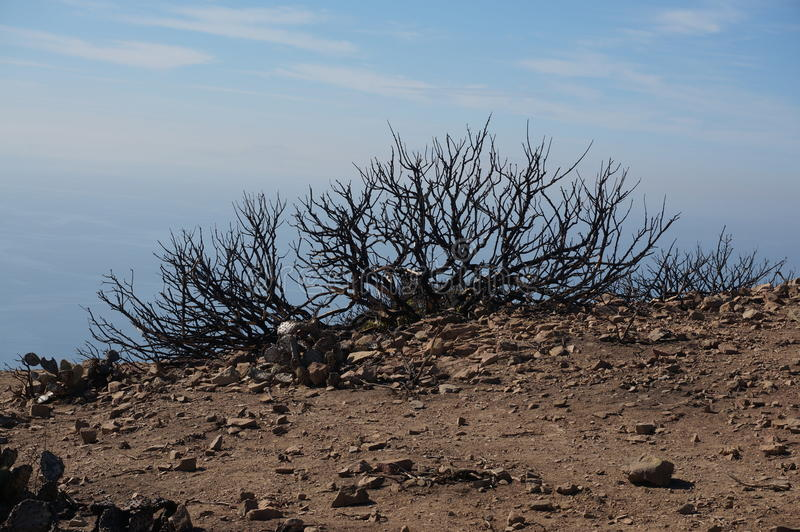 Burnt out bush after fire stock image