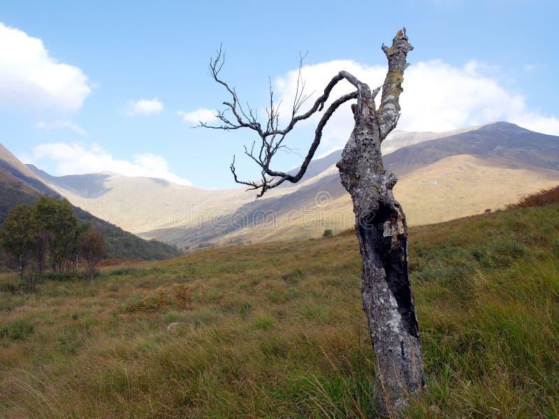 Download Burnt tree stock photo. Image of burned, growing, damage - 26644952