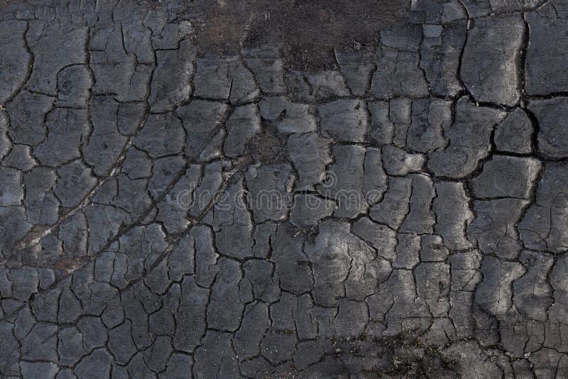 Burnt tree bark background texture stock image