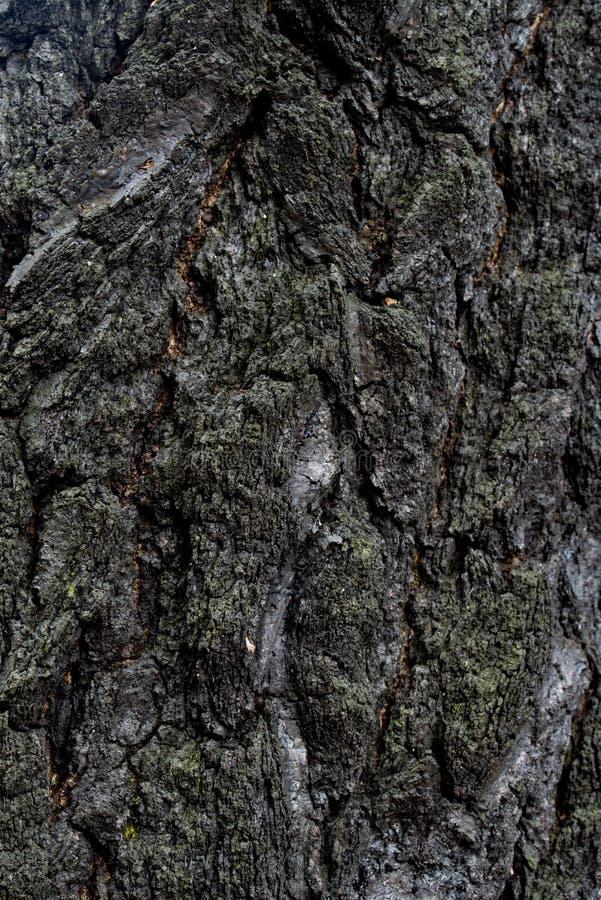 Burnt tree bark stock image