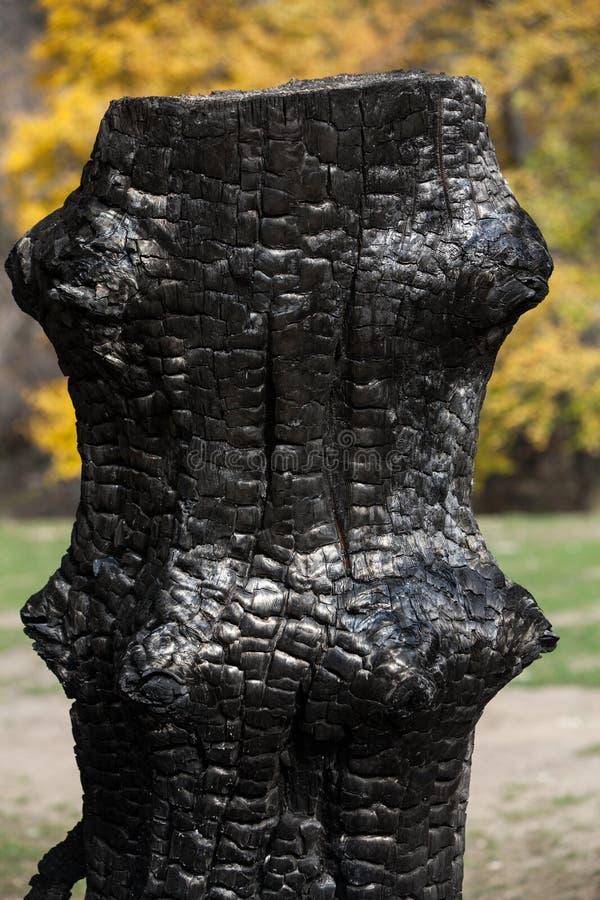 Download Burnt tree trunk stock photo. Image of brown, arrangement - 33099892