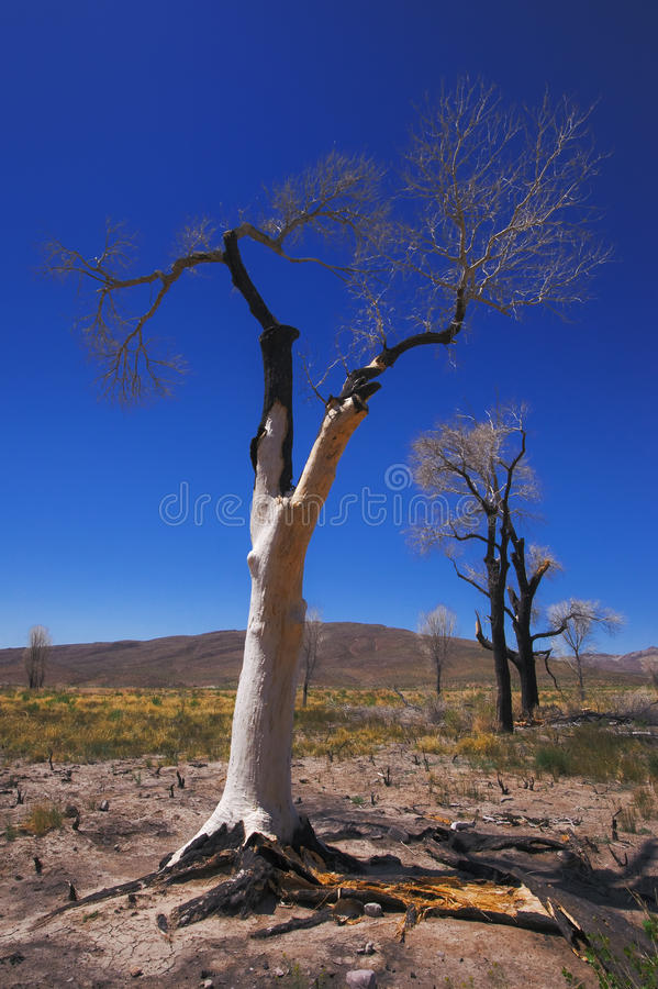 Download Burnt trees stock image. Image of southwest, heat, tree - 26460001