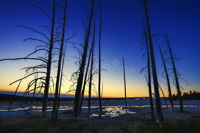 Burnt Trees Stock Photo