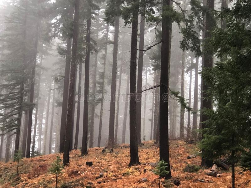 Burnt trees in a forest in fog royalty free stock photography