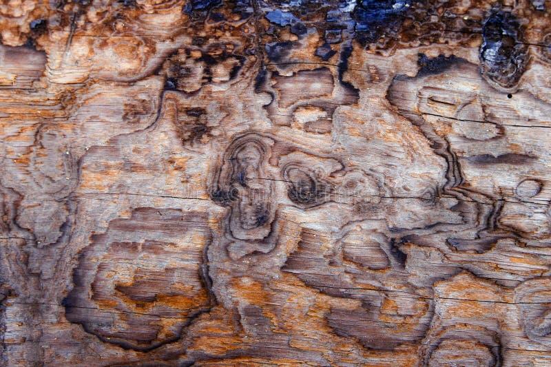 Burnt wood background royalty free stock image