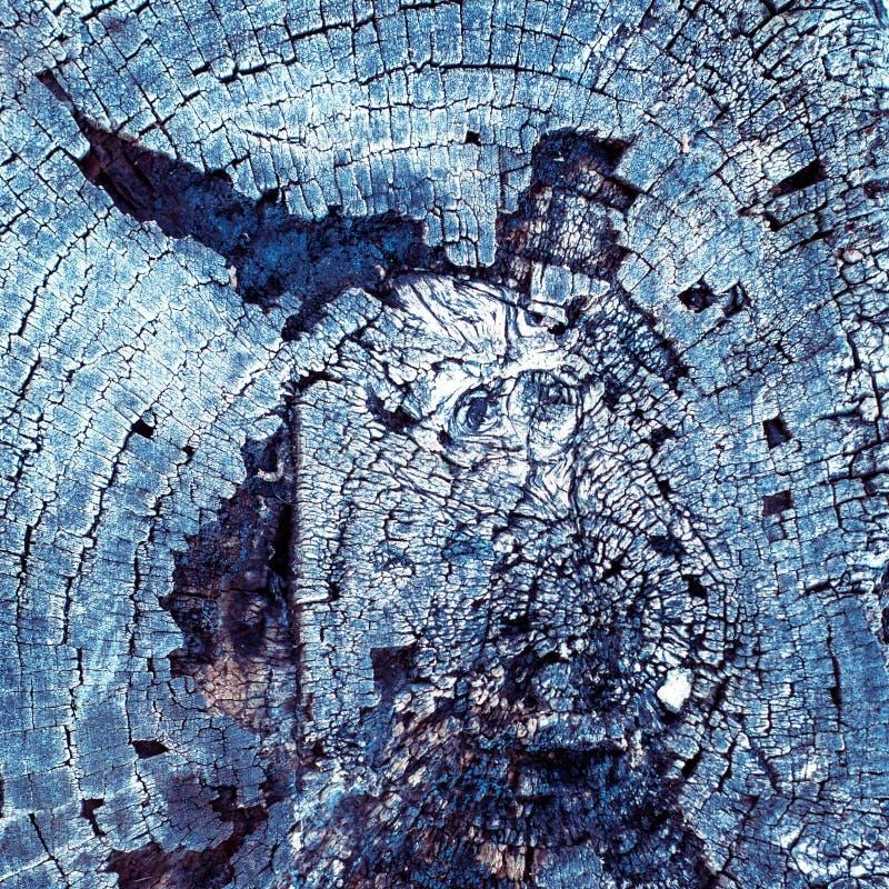 Burnt wood texture. Background of burnt wood texture. Closeup of burnt wooden log stock image