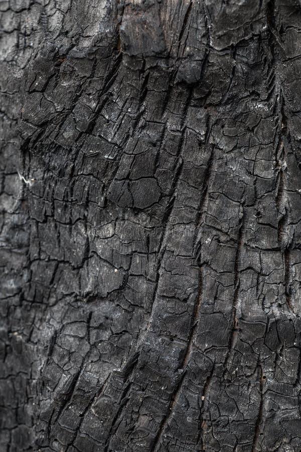 Burnt wood texture. Closeup shot stock images