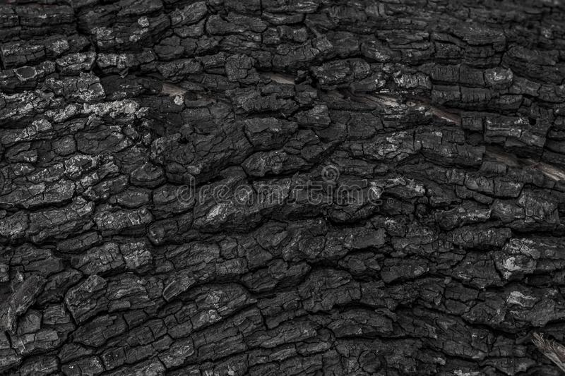 Burnt wooden texture background. Rough black wood surface caused by burning fire. Dark material made from coal or charcoal. Black wood stock image