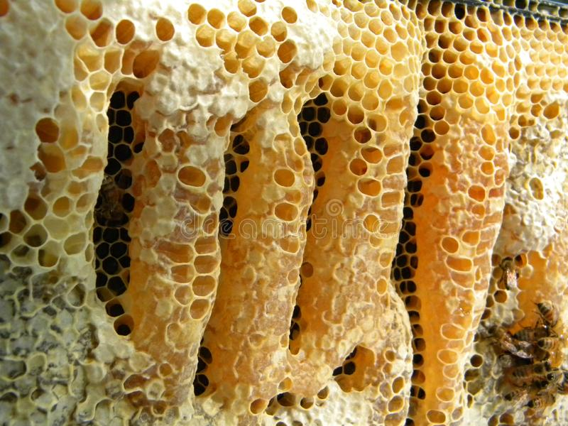 Burr Comb Capped Honey royaltyfri fotografi