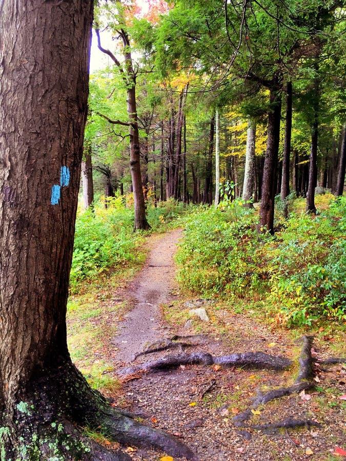 Burr Pond-het park van de staat wandelingssleep royalty-vrije stock foto's