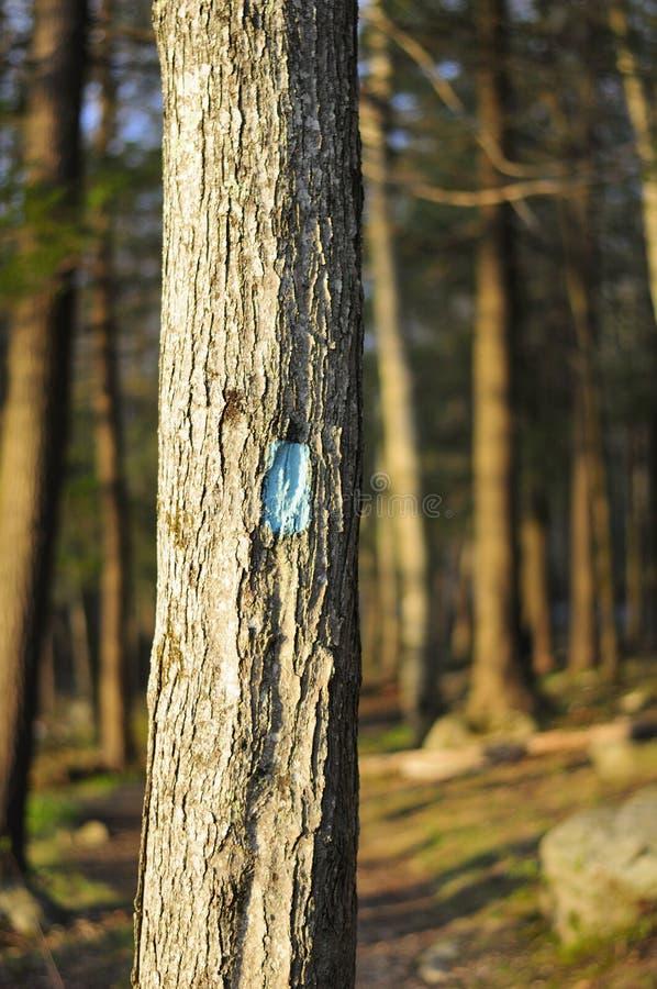 Burr Pond Hiking Trail Connecticut lizenzfreies stockfoto