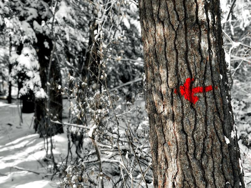 Burr Pond state park hiking trail Indicator arrow. A trail indicator arrow inside Burr Pond state park woods in Torrington Connecticut United States stock photo