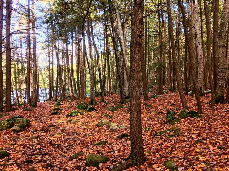 Burr Pond state park hiking trail. A trail inside Burr Pond state park woods in Torrington Connecticut United States stock images
