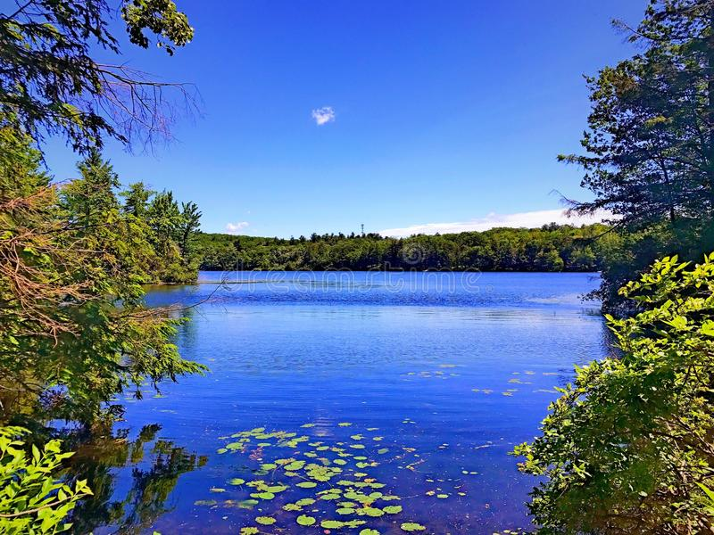 Burr Pond state park summer view stock image