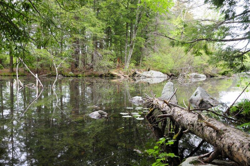 Burr stanu Stawowy park Torrington Connecticut obraz royalty free