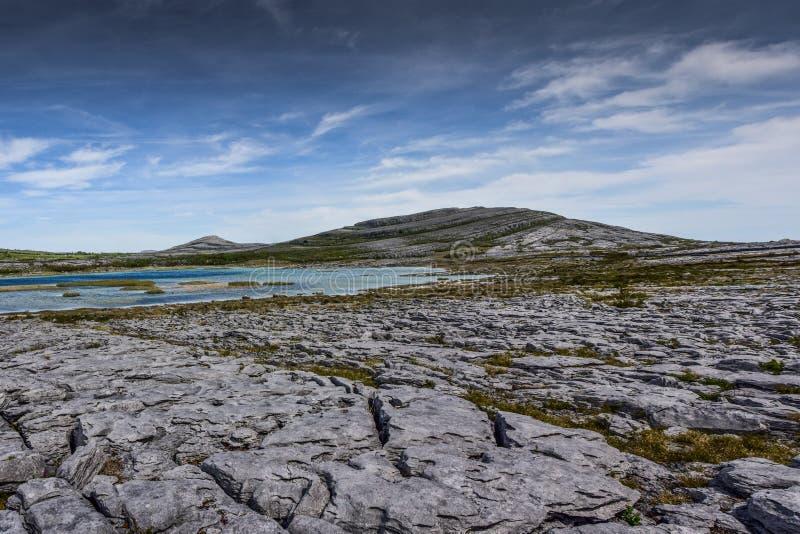 Burren в своем пальто лета стоковое изображение rf