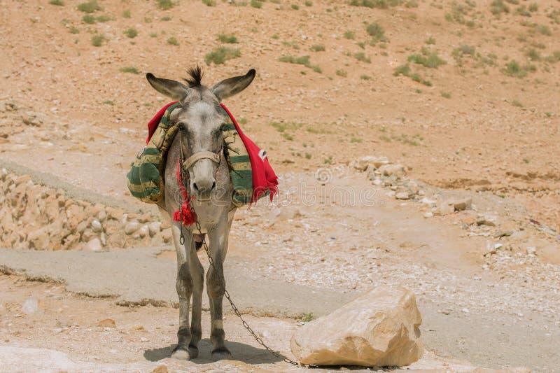 burro zdjęcia stock